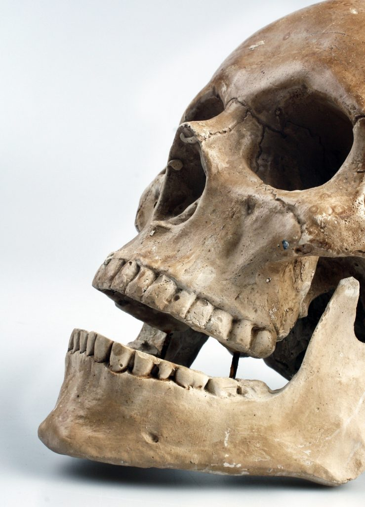 Human skull with white background. (image courtesy of Pixabay)